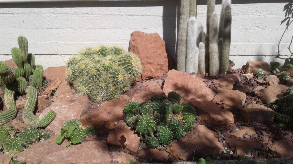 Cactus e rocce rosse nel giardino di casa. Laquercia21
