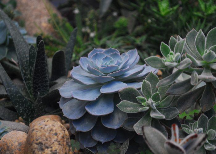 Arredare il giardino con i cactus e le pietre.