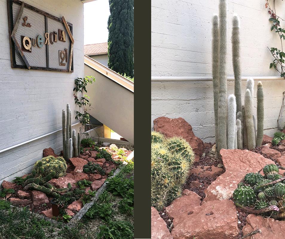 Giardino di cactus e cactacee.